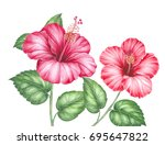 red hibiscus bouquet. image for ... | Shutterstock . vector #695647822