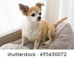 chihuahua dog | Shutterstock . vector #695650072