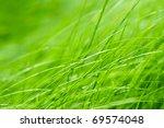 Bright Grass Background