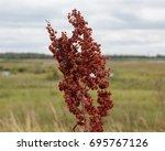 Small photo of Brown plant head against landscape background, St Aidans nature park