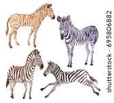 exotic zebra wild animal in a... | Shutterstock . vector #695806882