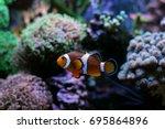 popular saltwater fish in... | Shutterstock . vector #695864896