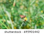 butterfly on flower | Shutterstock . vector #695901442