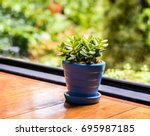 A Small Green Jade Plant Or...
