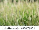 blur picture of grass flowers...   Shutterstock . vector #695992615