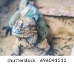 A Reptile  Chameleon Or Lizard...