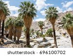 fan palms in an oasis in the...   Shutterstock . vector #696100702
