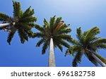 caribbean royal palms ... | Shutterstock . vector #696182758