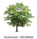 isolated tree on white... | Shutterstock . vector #696188686
