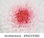 autumn flowers series ... | Shutterstock . vector #696219382