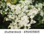 nature plant  field of flowers... | Shutterstock . vector #696405805