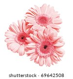 3 Flowers Gerber Isolated On...