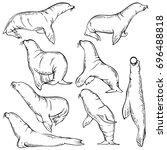 Sketch Set Of Sea Lion. Seal...