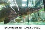 Small photo of Siberian sturgeon (Acipenser baerii). Wild life animal.