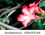 beautiful red flowers | Shutterstock . vector #696543196