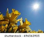 yellow jonquils worship the...