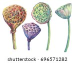 set with indian lotus dried... | Shutterstock . vector #696571282