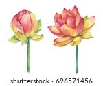 exotic pink flowers lotus ... | Shutterstock . vector #696571456