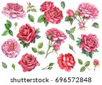 Stock photo set of red and pink roses in isolated background watercolor illustration 696572848