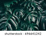 dark green palm foliage... | Shutterstock . vector #696641242
