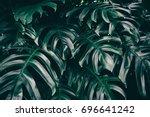 dark green palm foliage... | Shutterstock . vector #696641242