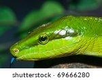 Постер, плакат: Closeup of green snake