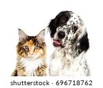 Stock photo dog and cat portrait 696718762
