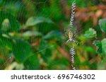 Wasp Spider  Argiope Bruennich...