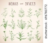 hand drawn sketch medicinal... | Shutterstock .eps vector #696783772
