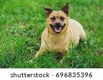 a little dog. a small dog... | Shutterstock . vector #696835396