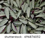 lush teeming rose painted... | Shutterstock . vector #696876052