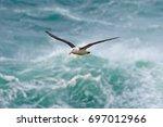 black browed albatross ... | Shutterstock . vector #697012966
