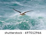 albatross in fly with sea wave... | Shutterstock . vector #697012966