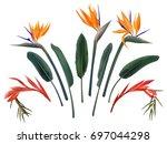 strelitzia reginae and...   Shutterstock .eps vector #697044298