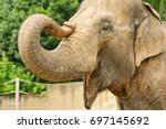 An Elephant With A Raised Nose...