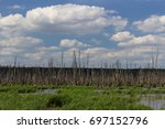 Dead Trees In A Swamp