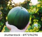 Little Watermelon In Hand