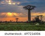 sunrise over avenue of the... | Shutterstock . vector #697216006