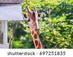 giraffe | Shutterstock . vector #697251835