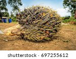 close up of fresh oil palm... | Shutterstock . vector #697255612