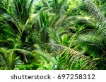 jungle jungle | Shutterstock . vector #697258312