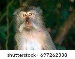monkeys in ubud  bali | Shutterstock . vector #697262338