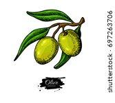olive branch. hand drawn vector ...   Shutterstock .eps vector #697263706