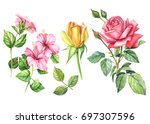 set  yellow and red roses and... | Shutterstock . vector #697307596