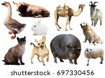 assortment of different pet and ... | Shutterstock . vector #697330456