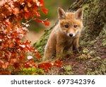 fox | Shutterstock . vector #697342396