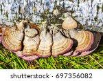 Inedible Mushroom Or Colored...
