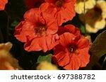 Beautiful Flowers Of...