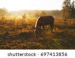 beautiful scenic sunrise  horse ... | Shutterstock . vector #697413856