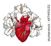 stylized anatomical human heart ... | Shutterstock .eps vector #697493152